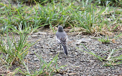 Img_25972a